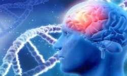 اكتشاف دواء يحمي الخلايا العصبية عند الإصابة بمرض الزهايمر
